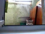 Кот- шпион! Внимание!! Не взрывайтесь от смеха!!))))