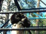 обезьяна держит в лапах десять рублей